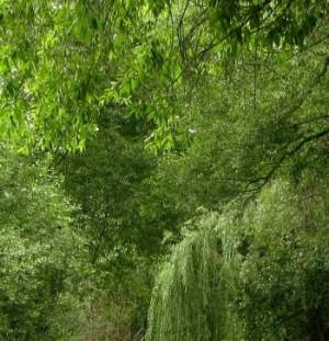 Снятие стресса — гештальт-прогулки